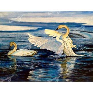 Thunder Swans